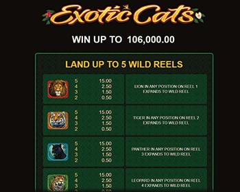 Exotic Cats kolikkopeli